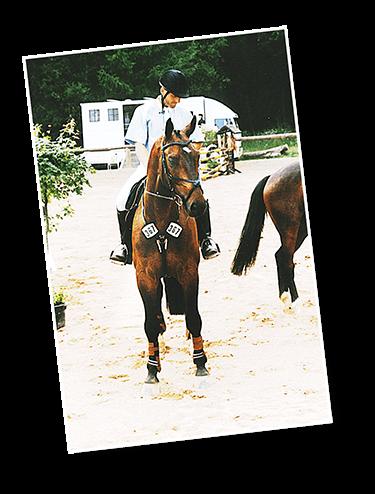 Fotovorlage für ein Pferdeportrait, Hartmut Hellner, Pferdemalerei
